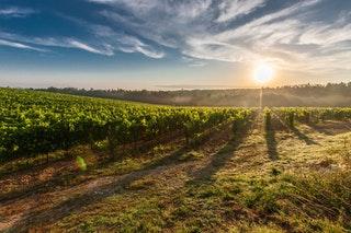 A borászat, a bor készítés előnyei